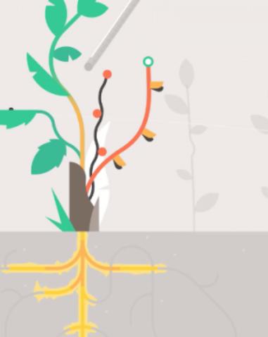 Chematische tekening wortels